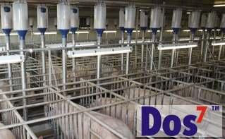 Система индивидуального кормления свиноматок Dos7